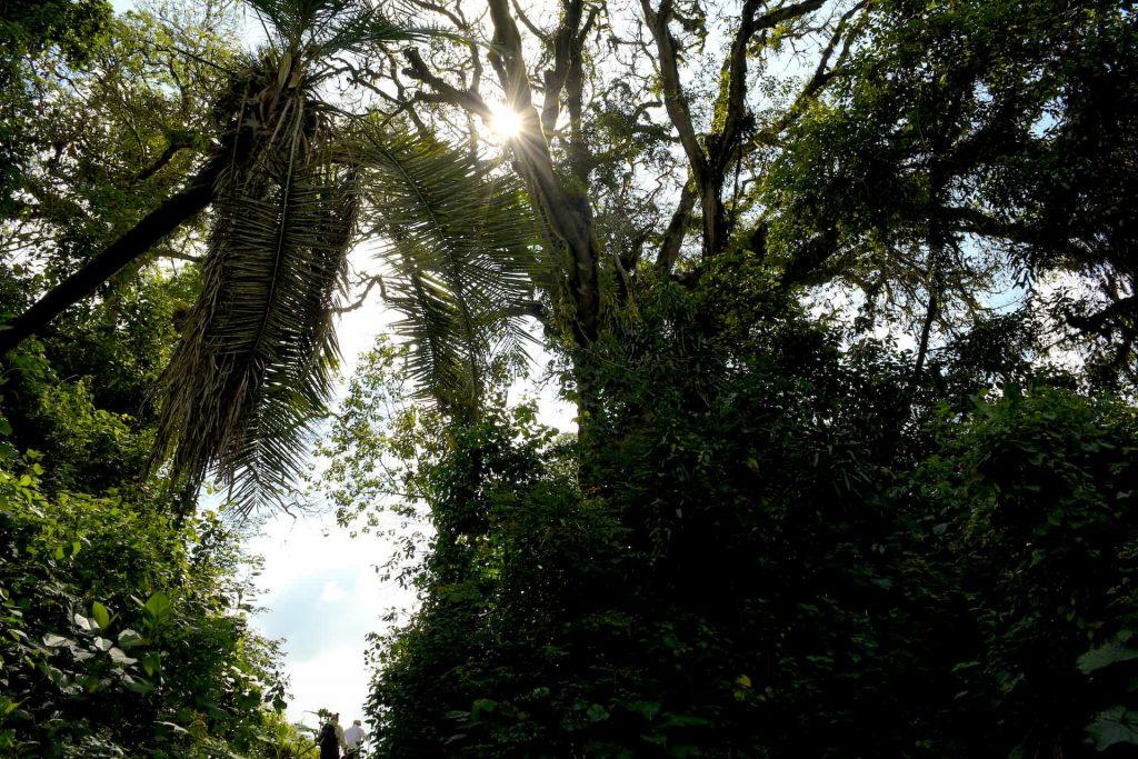 ETHIOPIA, Kaffa, Coop Diri - Rain Forest